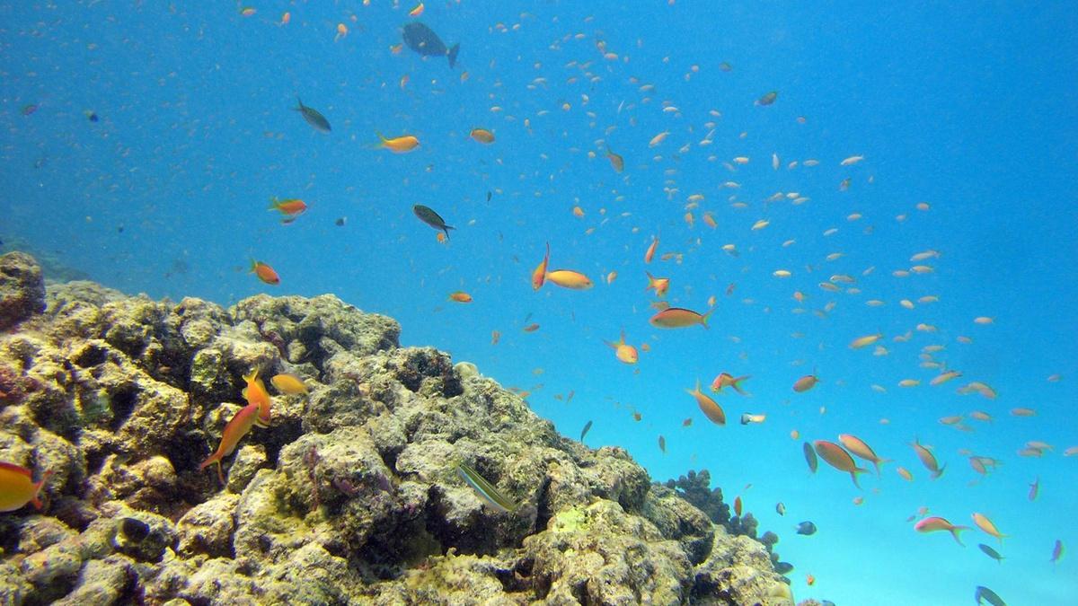 Buceo - Submarinismo Hotel Fuerteventura
