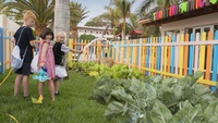 Miniclub y Kids Club   Hotel Fuerteventura