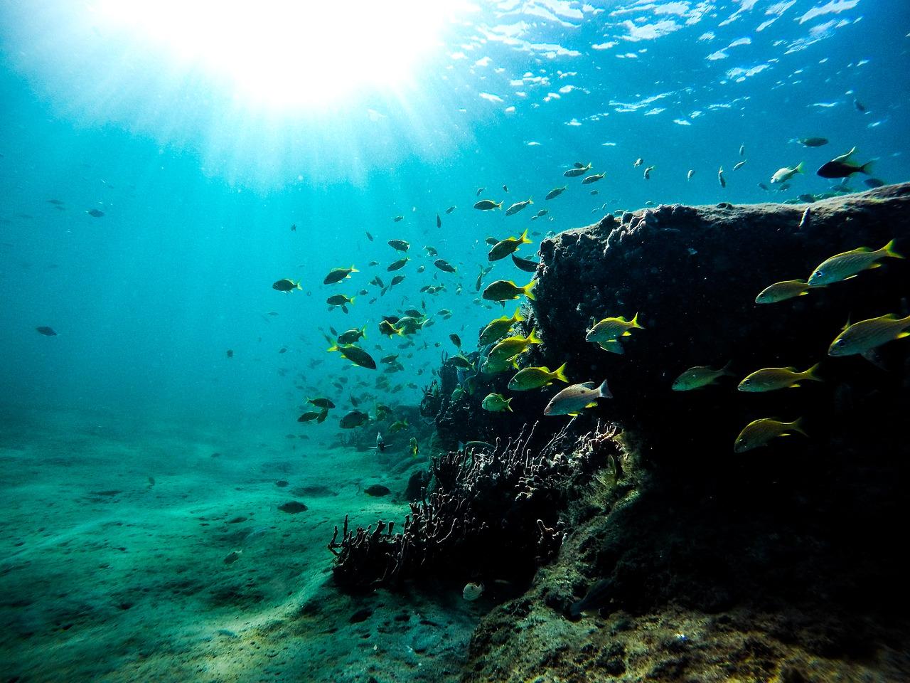 scuba diving in gran canaria