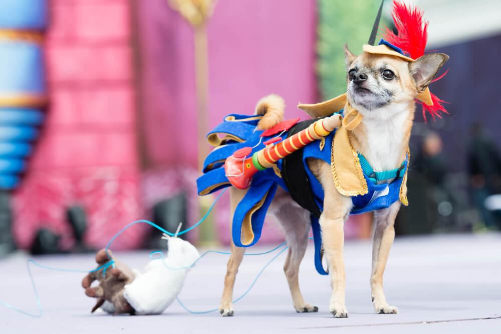 gran canaria carnival